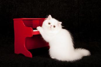 обоя животные, коты, черный, фон, пианино