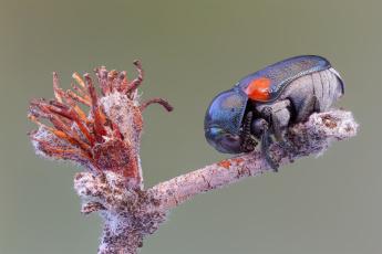 обоя животные, насекомые, фон, макро, ветка, жук