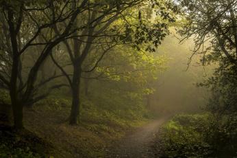 обоя природа, дороги, туман, дорога, лес