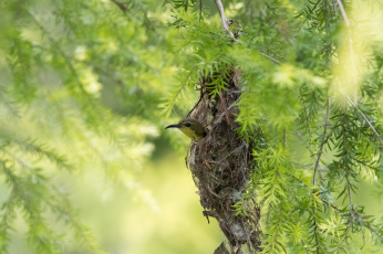 обоя животные, птицы, природа, ветки, дерево, клюв, птица