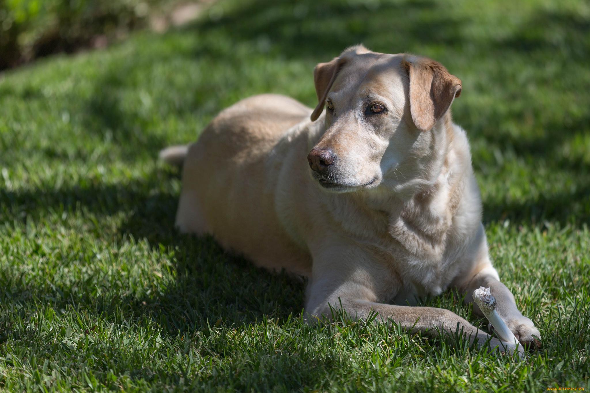 пес на лужайке скачать