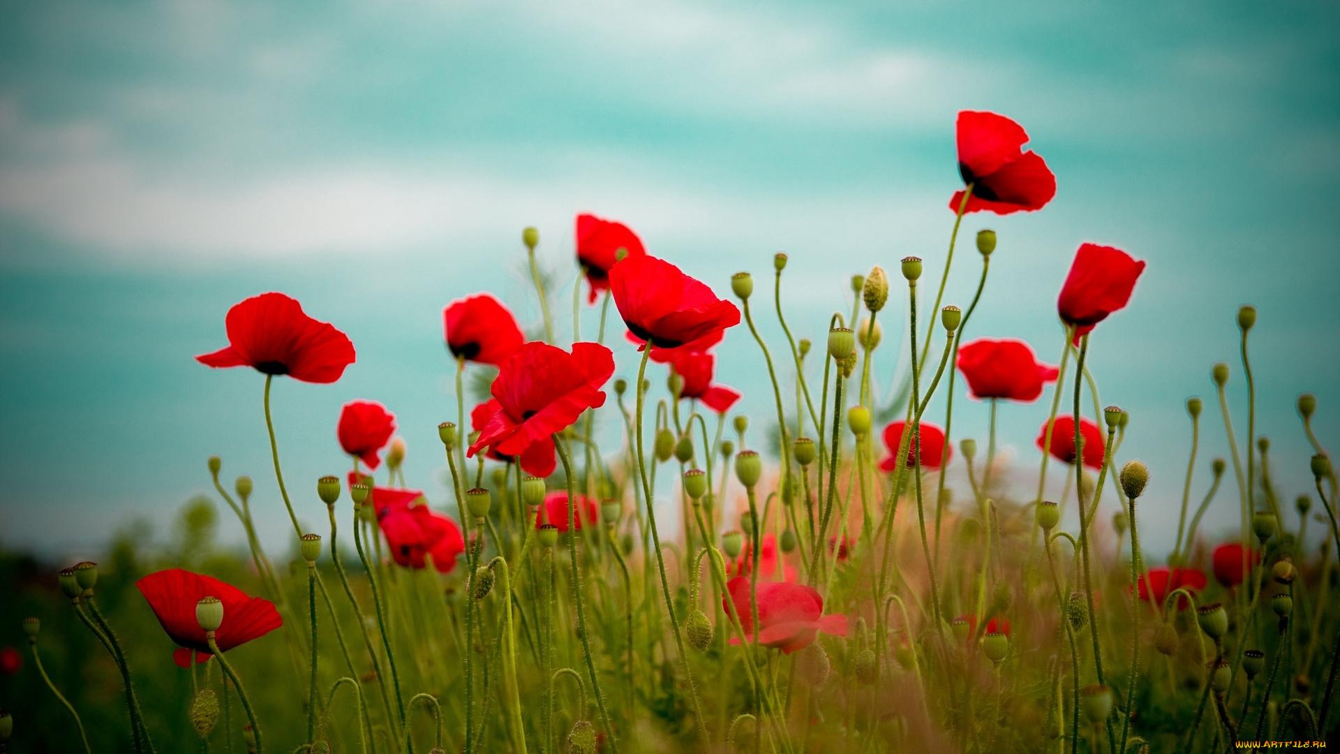 маяк мальва цветы небо на телефон