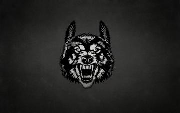 Картинка рисованное минимализм волк морда wolf темный фон