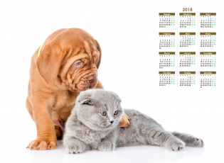 обоя календари, животные, собака, белый, фон, кошка
