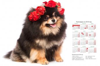 обоя календари, животные, цветы, собака, белый, фон, розы