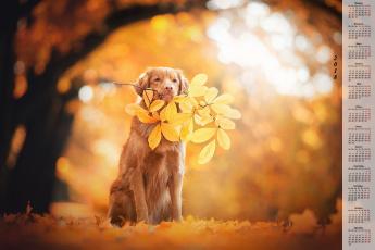 обоя календари, животные, листья, ветка, собака, осень