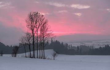 обоя природа, зима, зарево, деревья, снег