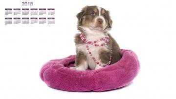 обоя календари, животные, собака, белый, фон