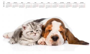 обоя календари, животные, собака, кошка, белый, фон