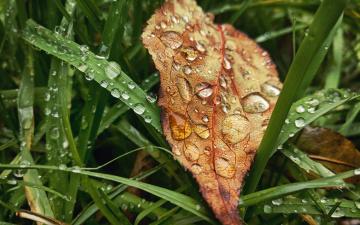 обоя природа, макро, листья, rain, трава, grass, настроение, drop, autumn, дождь, лист, капли, осень, leaves, fall