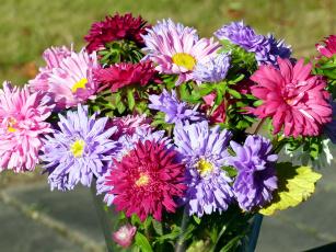 обоя цветы, астры, букет