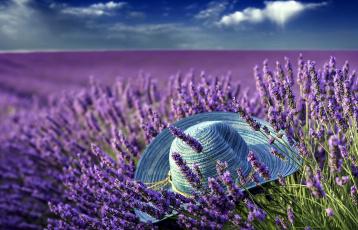 обоя цветы, лаванда, поле, шляпа, лиловый