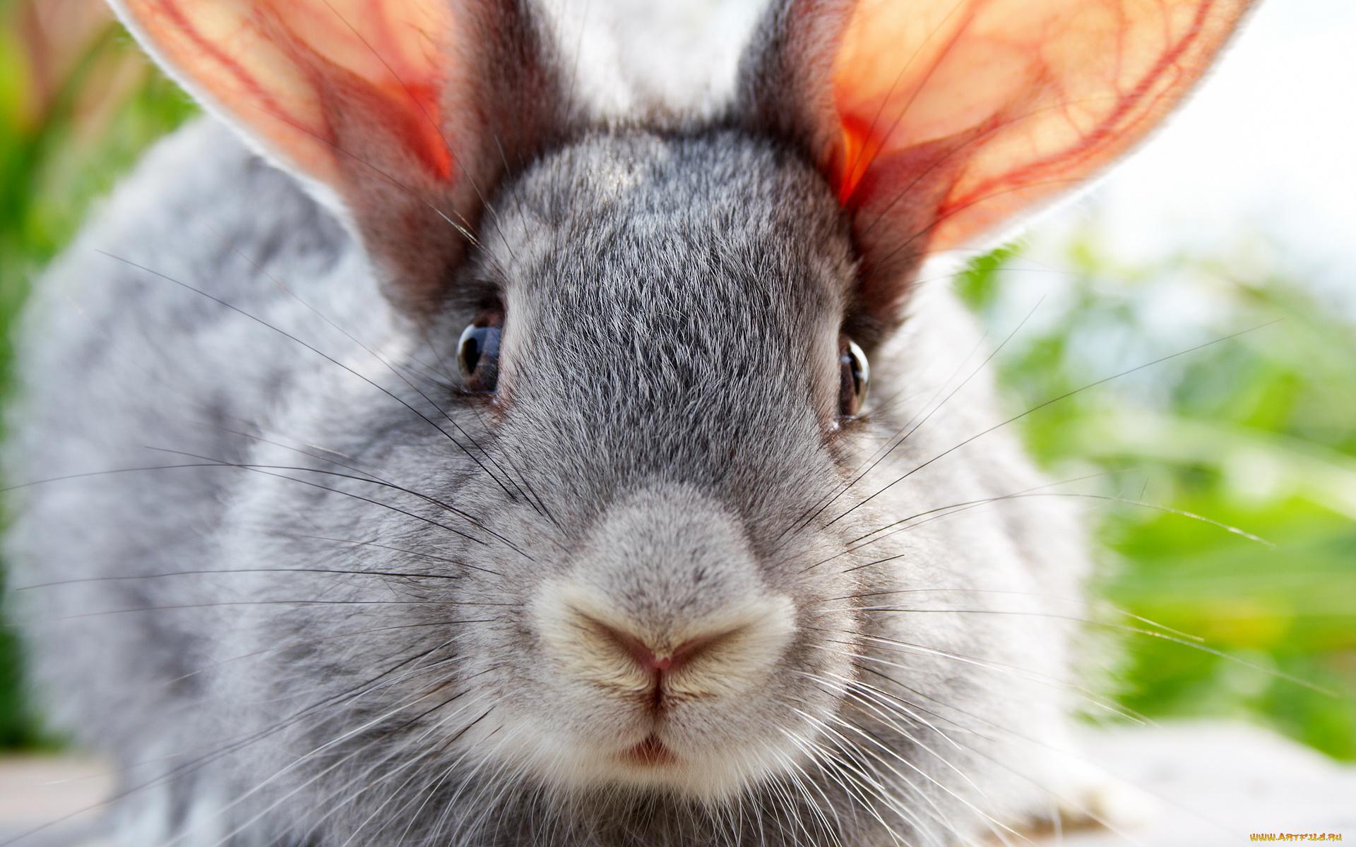 Кролик смешные картинки