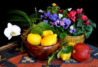Картинка еда натюрморт виола орхидея лимоны гранат