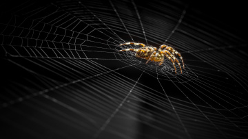 обоя животные, пауки, паук, паутина, фон