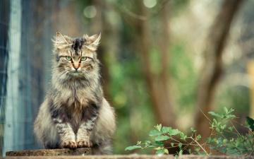 обоя животные, коты, ветка, сад, кот