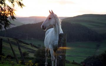обоя животные, лошади, лошадь, закат, горы, ограда, белая