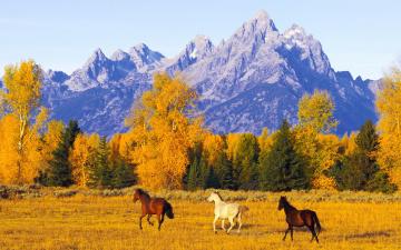 обоя животные, лошади, осень, горы, лес