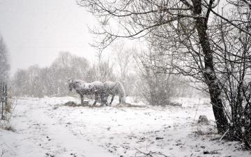 обоя животные, лошади, снегопад, снег, зима, кусты, деревья