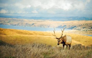 обоя животные, олени, облака, река, луга, олень