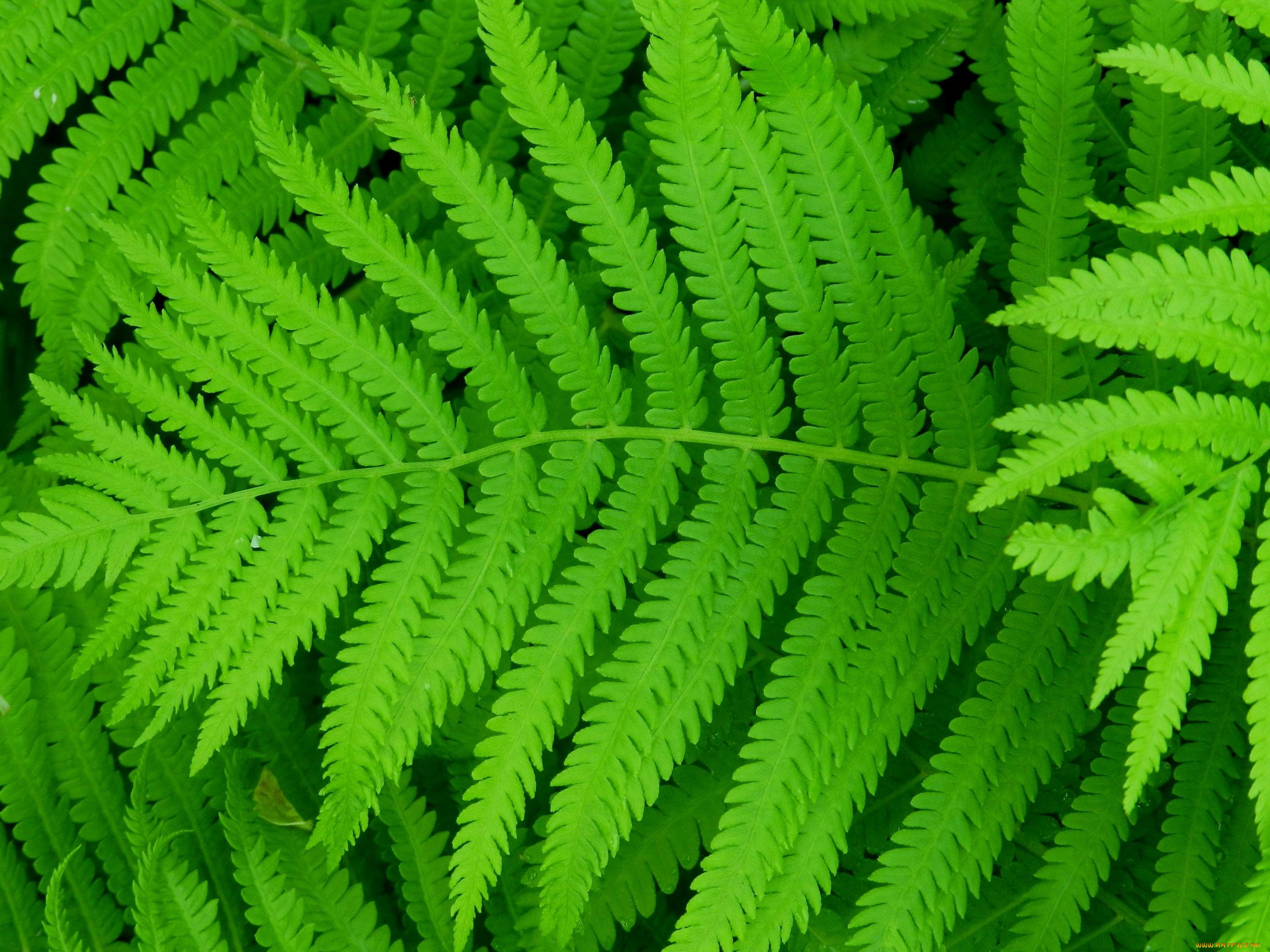 природа Папоротник листья бесплатно