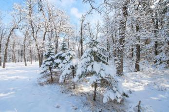 обоя природа, зима, деревья, иней, снег