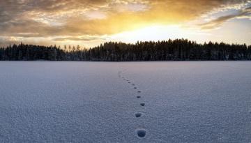 обоя природа, зима, лес, снег, следы
