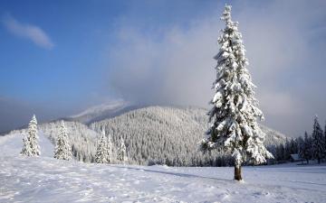 обоя природа, зима, лес, снег, елки