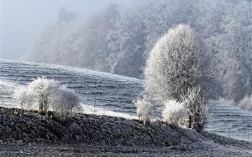 обоя природа, зима, снег, холм, иней, деревья