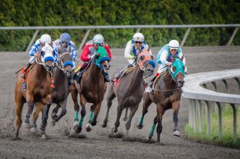Картинка спорт конный+спорт скачки жокей лошадь ипподром