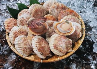 обоя еда, рыба,  морепродукты,  суши,  роллы, устрицы