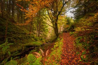 обоя природа, лес, река