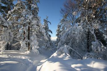 обоя природа, зима, деревья, снег, пейзаж, сугробы