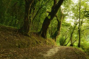 обоя природа, дороги, сальнес, галисия, испания, лес, деревья, дорога