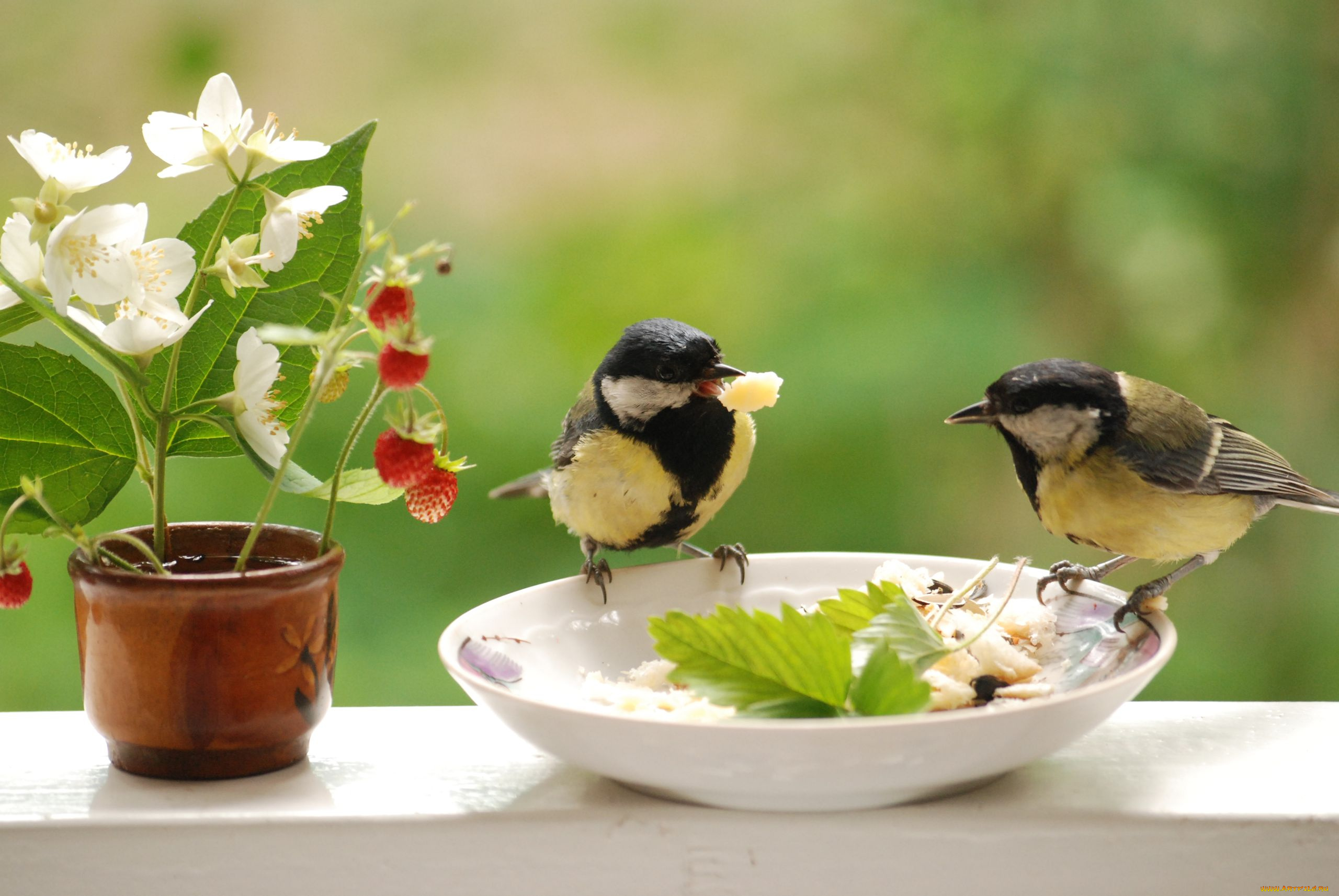 Открытки с добрым утром птичка, роз