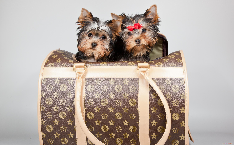 собака пакет сумка  № 1143257 без смс