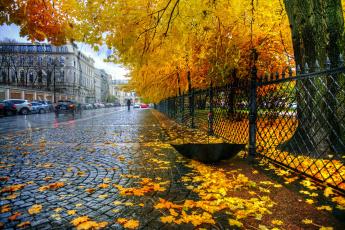 обоя города, санкт-петербург,  петергоф , россия, екатерининский, парк, забор, листья, санкт, петербург, зонт, осень, дождь