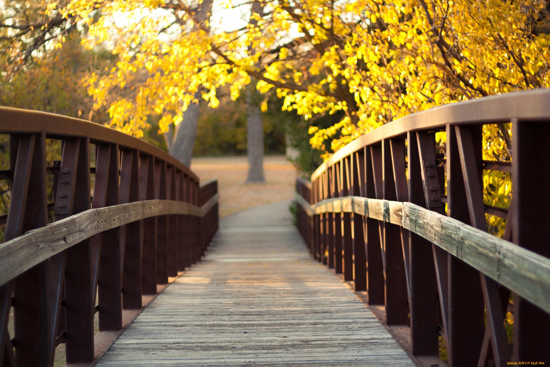архитектура мост природа деревья бесплатно