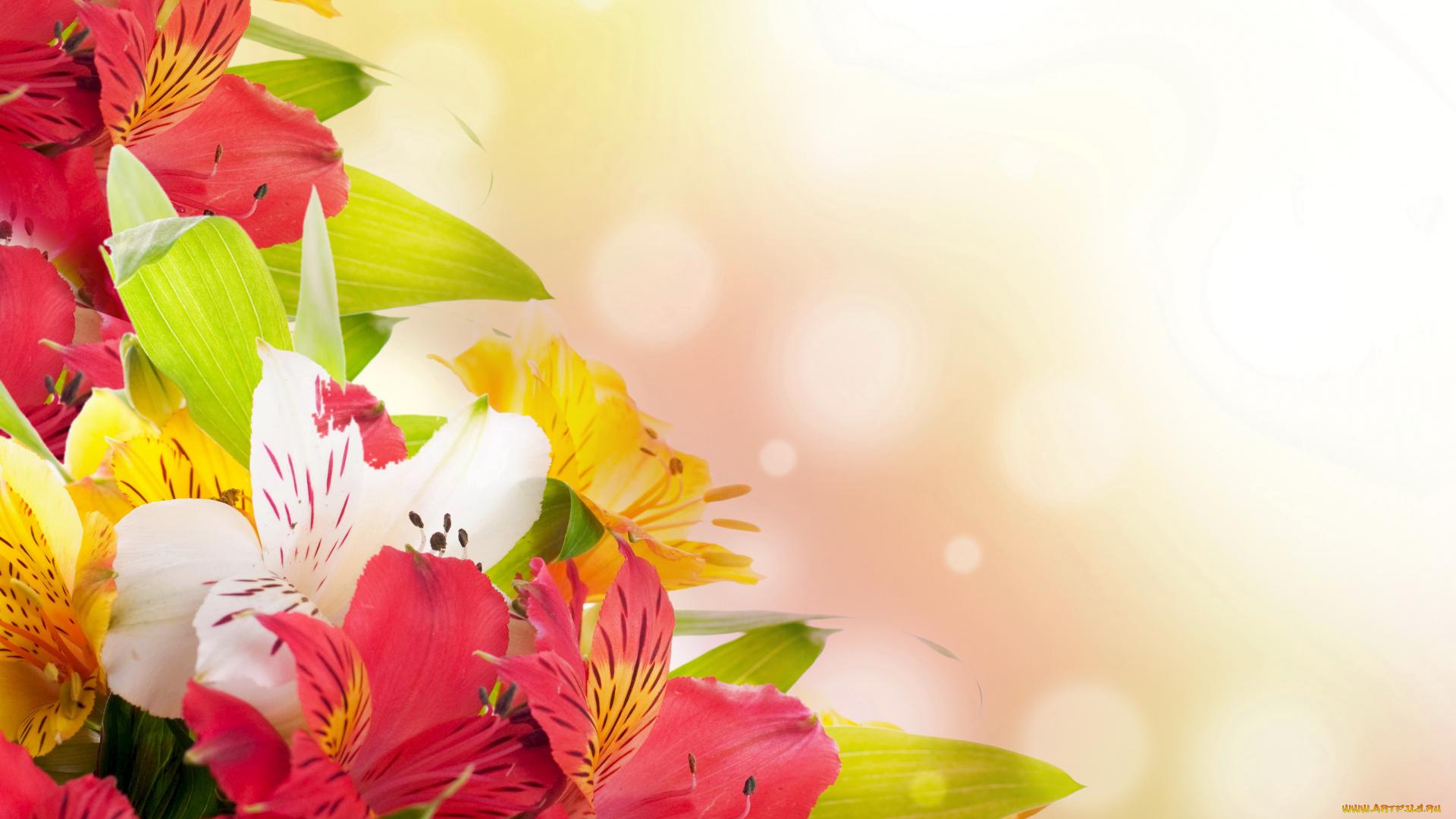 Поздравление открытки алене с днем рождения прикольные, поздравительные марта