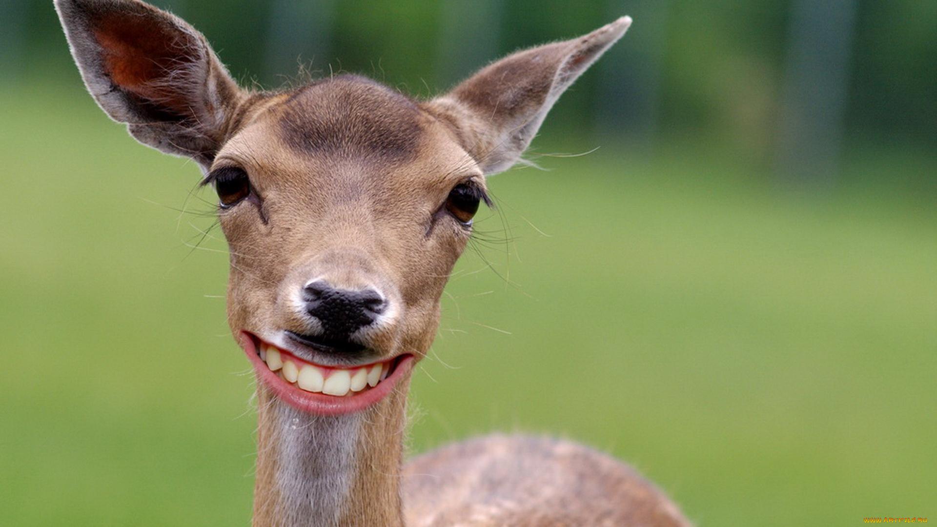 Смешные фото оленей