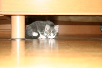 Картинка животные коты котёнок