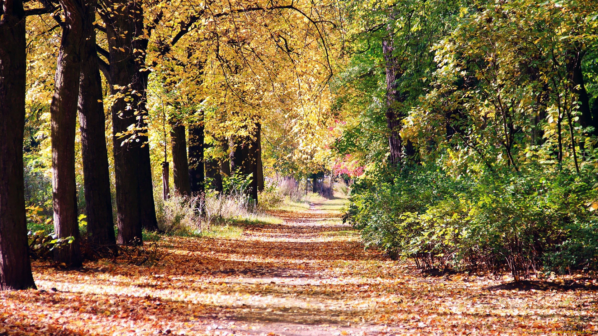 для меня осенние аллеи в лесах и парках картинки того, как