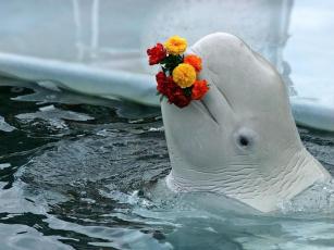 Картинка животные дельфины