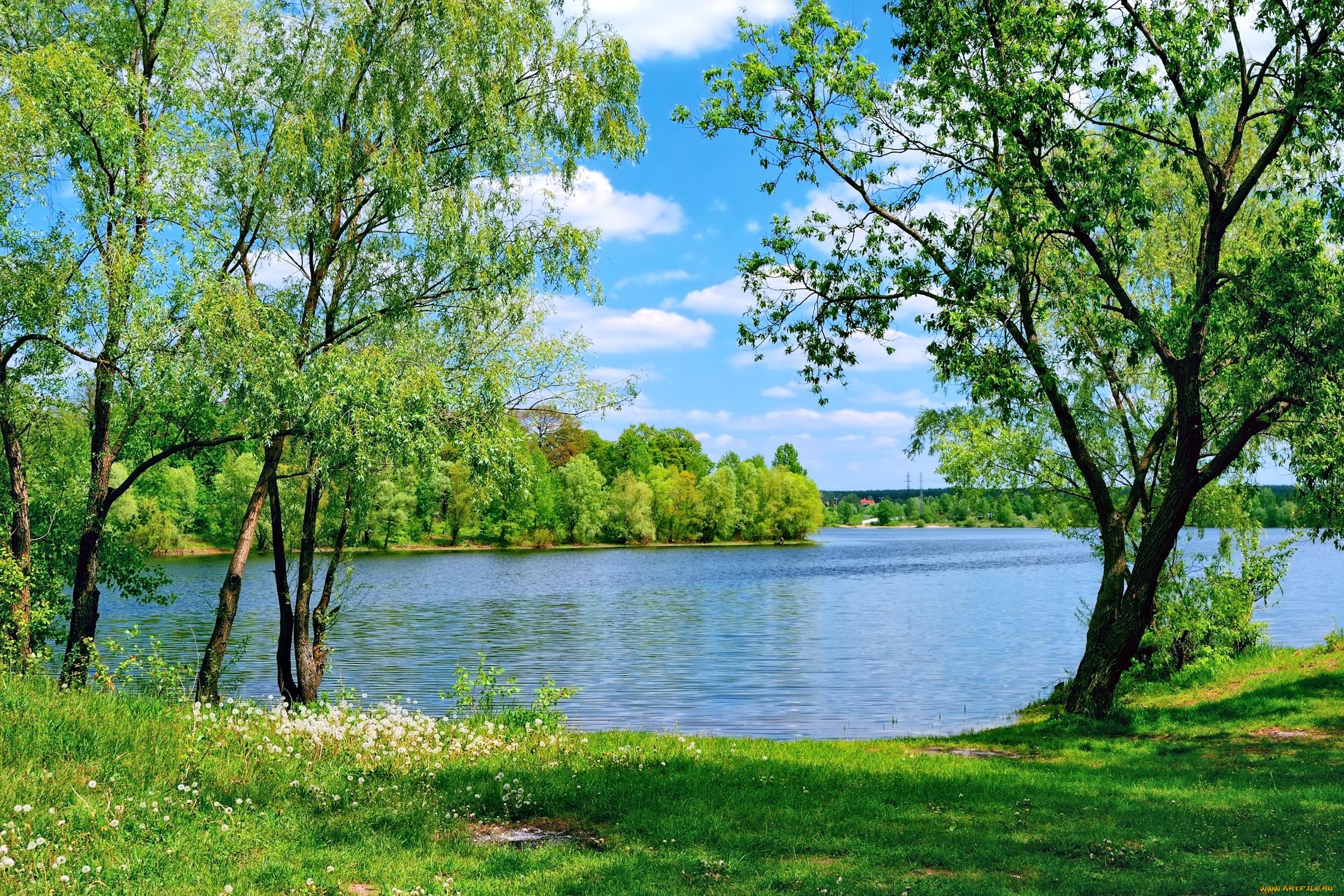 березы берег озеро  № 1195485 бесплатно