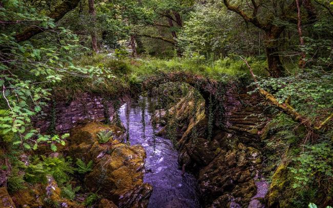 Обои картинки фото природа, реки, озера, река, лес