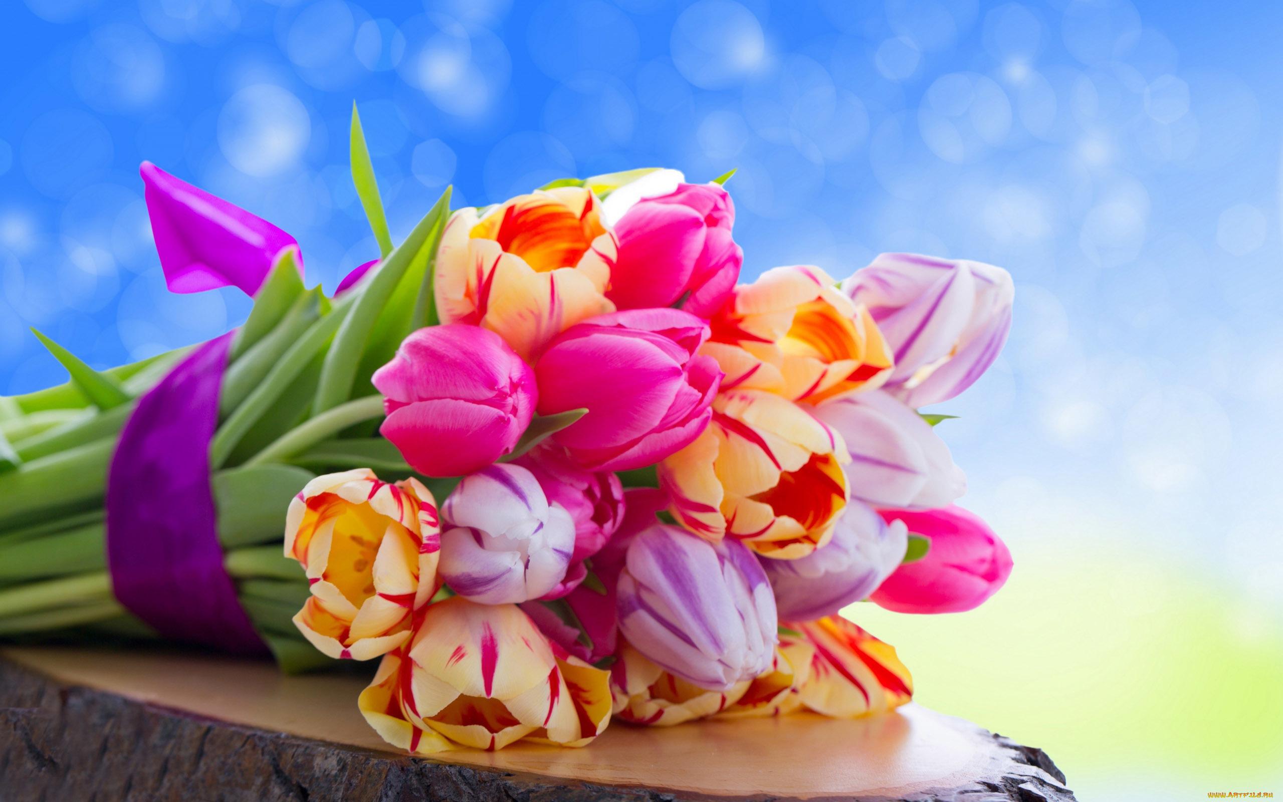 Цветы тюльпанов открытки, девушка