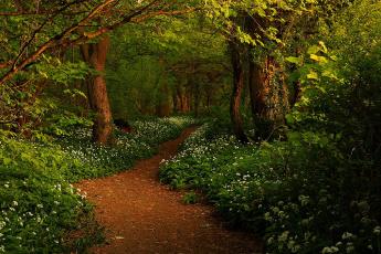 Картинка spring природа дороги заросли лес тропинка