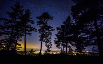 Картинка природа деревья силуэт швеция ночь огни