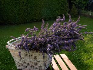обоя цветы, лаванда, корзинка, лужайка, стол