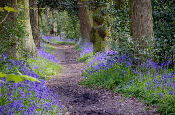 Картинка природа дороги цветы тропинка лес